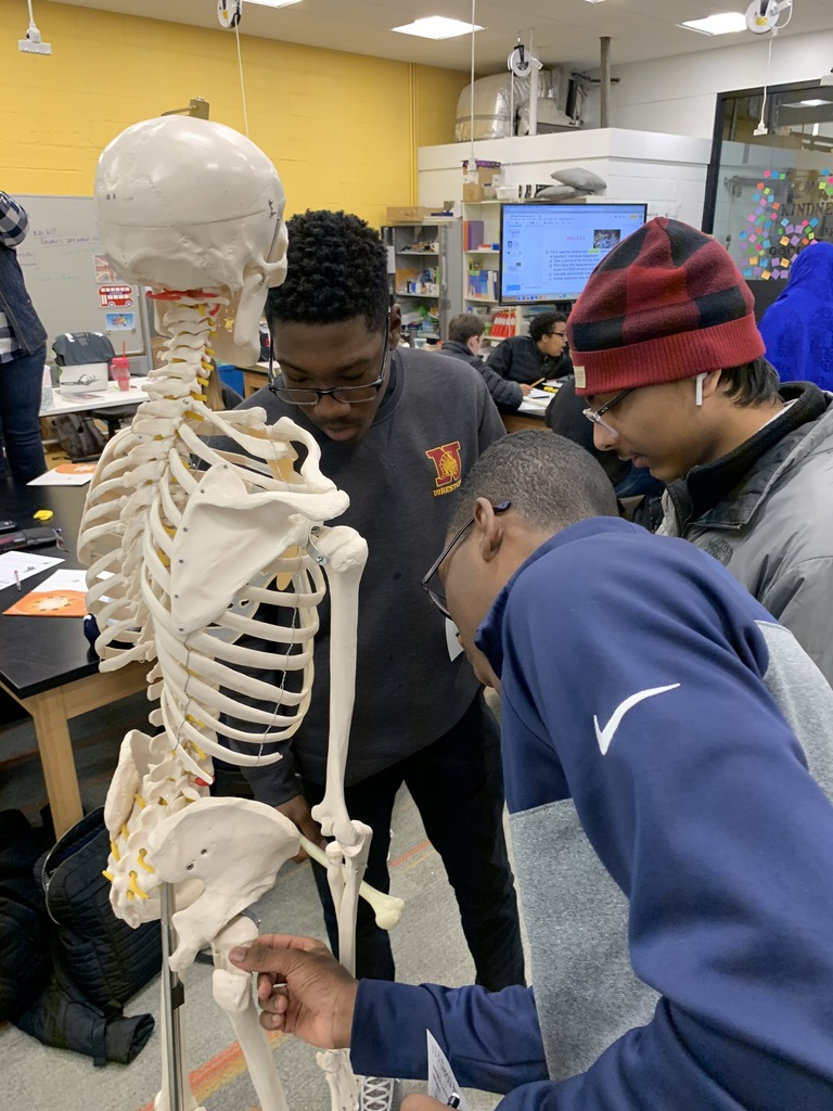 Students compare their unknown bone to the class skeleton.