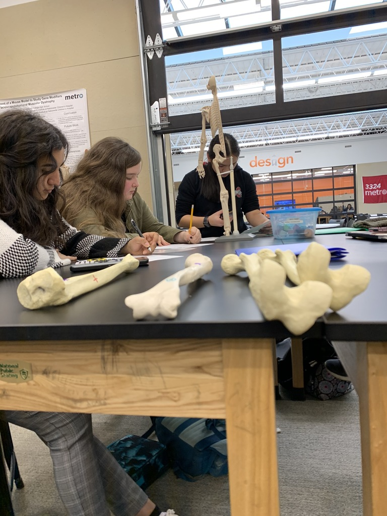 Artistic view of bones and students working.