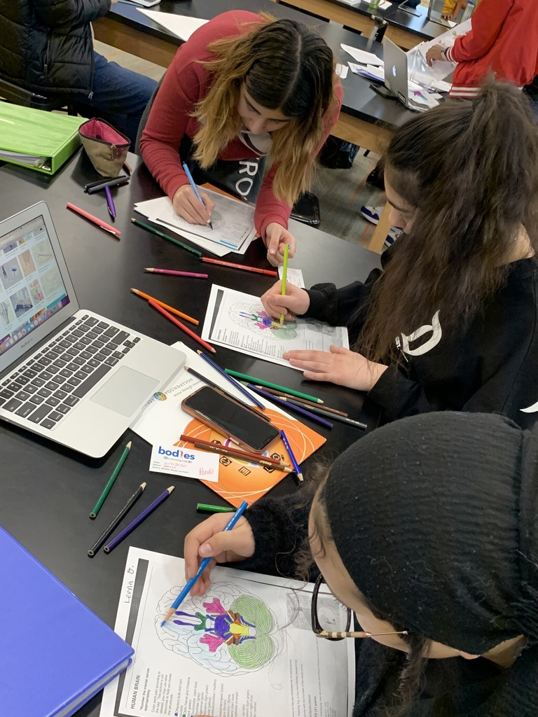 Students identify cranial nerves by locating and coloring a human brain.